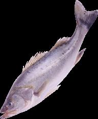 Fish Free PNG Image Download 13