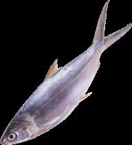 Fish Free PNG Image Download 15
