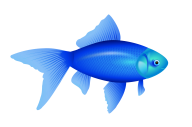 Fish Free PNG Image Download 18