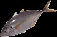 Fish Free PNG Image Download 19