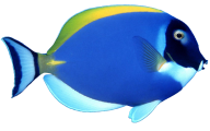 Fish Free PNG Image Download 20