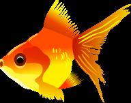 Fish Free PNG Image Download 21