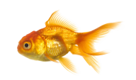 Fish Free PNG Image Download 23