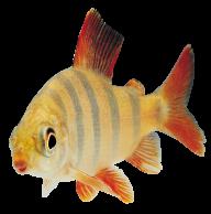 Fish Free PNG Image Download 25