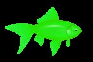 Fish Free PNG Image Download 27