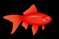 Fish Free PNG Image Download 28