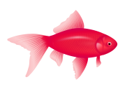 Fish Free PNG Image Download 29