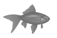 Fish Free PNG Image Download 30