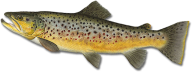 Fish Free PNG Image Download 4