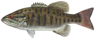 Fish Free PNG Image Download 5