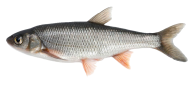 Fish Free PNG Image Download 6