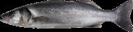Fish Free PNG Image Download 7
