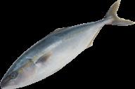 Fish Free PNG Image Download 9