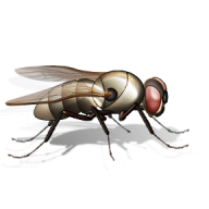 Fly Free PNG Image Download 1