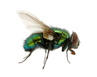 Fly Free PNG Image Download 11