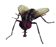 Fly Free PNG Image Download 12