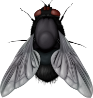 Fly Free PNG Image Download 14