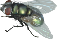 Fly Free PNG Image Download 15