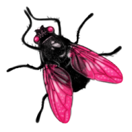 Fly Free PNG Image Download 2