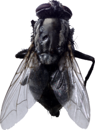 Fly Free PNG Image Download 4