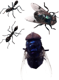 Fly Free PNG Image Download 5