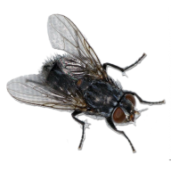 Fly Free PNG Image Download 6