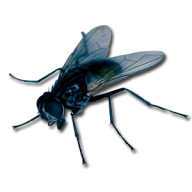 Fly Free PNG Image Download 8