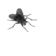 Fly Free PNG Image Download 9