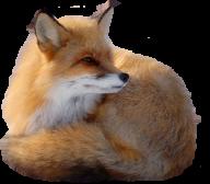 fox free png