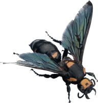 free bee png download