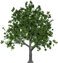 Free Tree Png