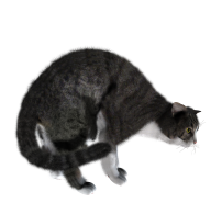 Freightning Cat Png