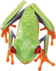 frog free png download