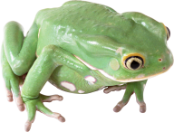 frog hd png
