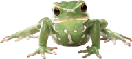 frog png download free