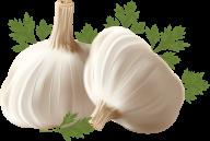 Garlic Free PNG Image Download 11
