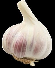 Garlic Free PNG Image Download 17