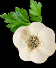 Garlic Free PNG Image Download 19