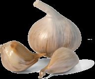 Garlic Free PNG Image Download 22