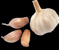 Garlic Free PNG Image Download 26