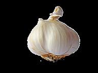 Garlic Free PNG Image Download 29