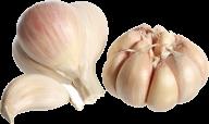 Garlic Free PNG Image Download 8