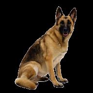 German Shephard Dog Png Image
