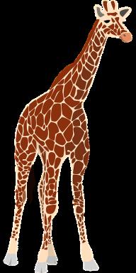 Giraffe Free PNG Image Download 18