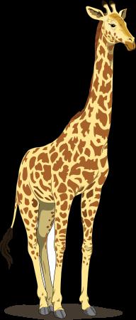 Giraffe Free PNG Image Download 20