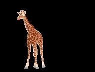 Giraffe Free PNG Image Download 4