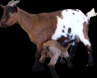 Goat Free PNG Image Download 1