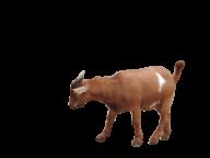 Goat Free PNG Image Download 17