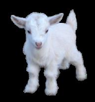 Goat Free PNG Image Download 18