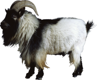 Goat Free PNG Image Download 2